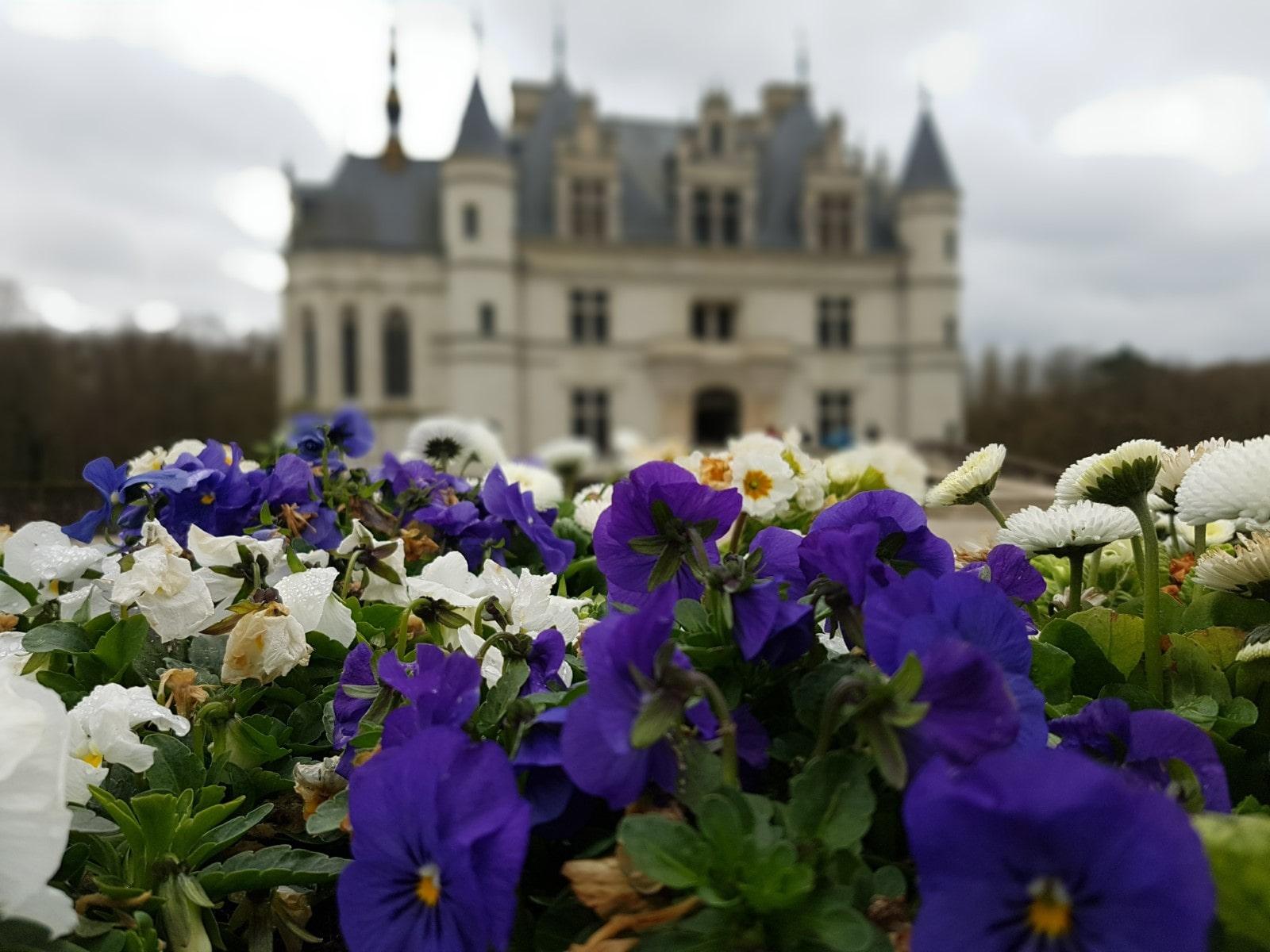 I fiori che adornano il castello vengono coltivati proprio nei giardini di Chenonceau.