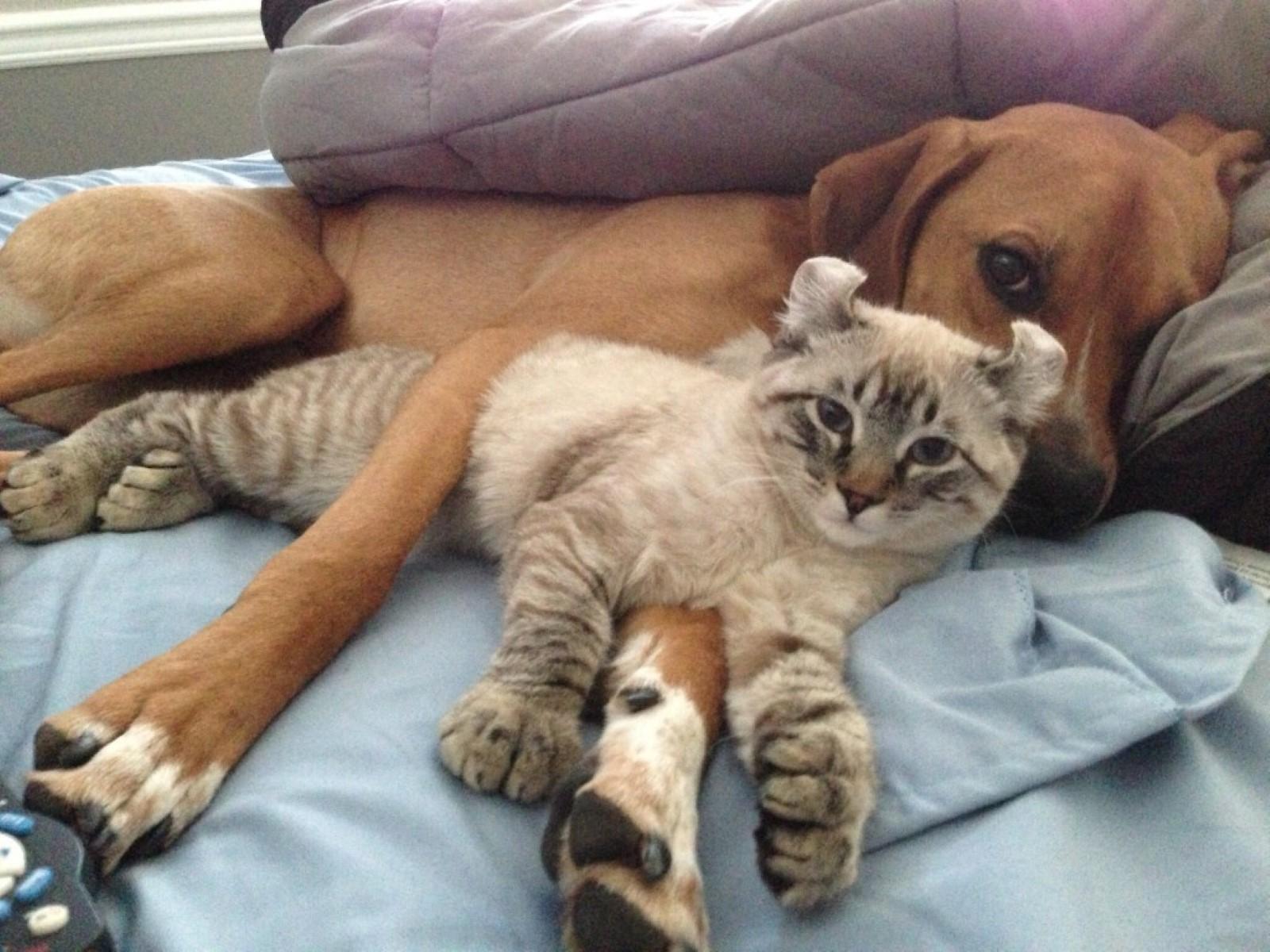 Cani e Gatti Non Sono Pericolosi