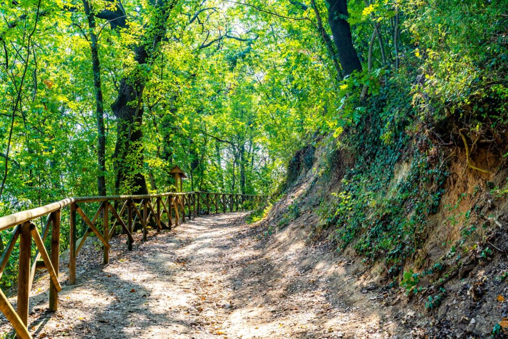 bosco di paolo e francesca