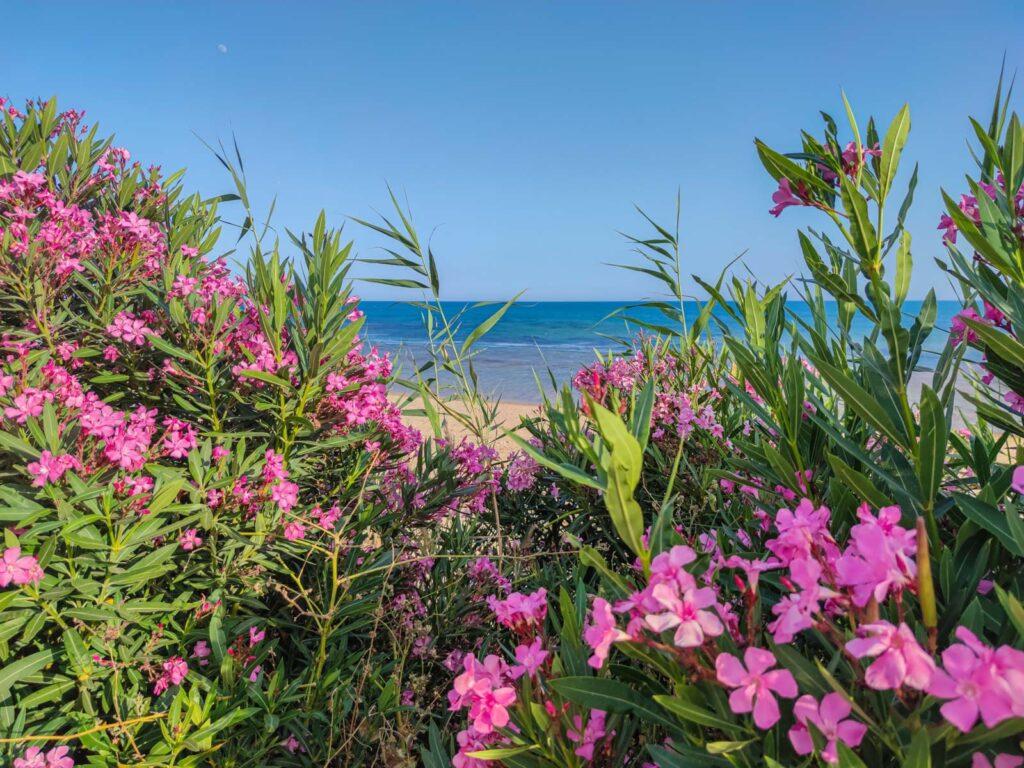 colori di sicilia