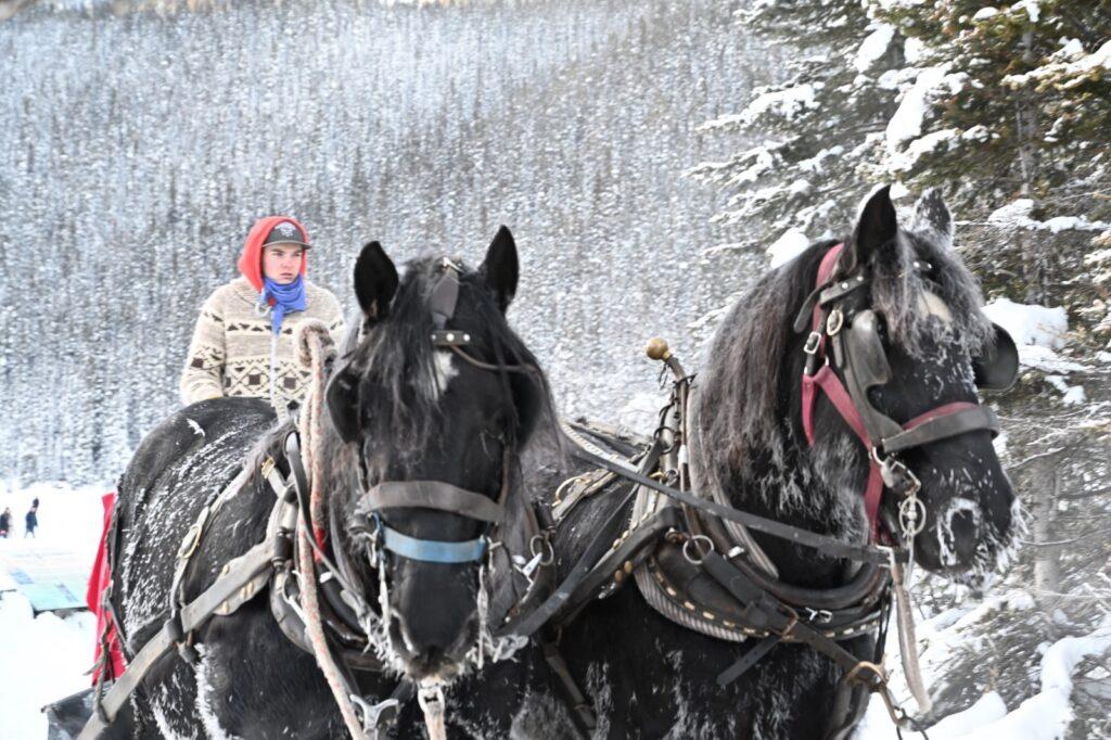 carrozza e cavalli