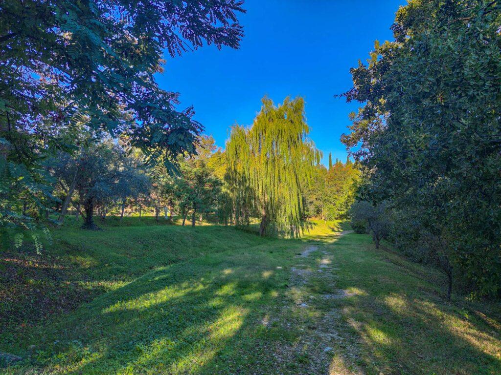 aree verdi e salici