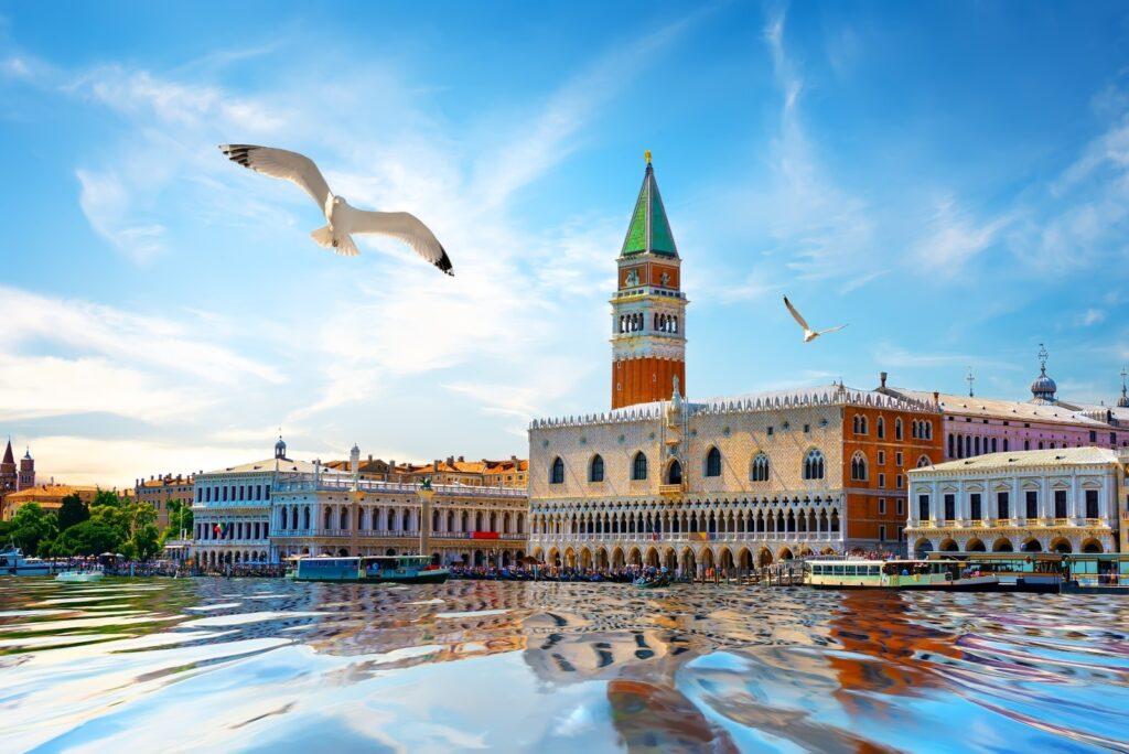 gabbiani a venezia